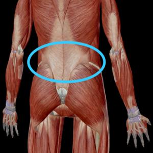 腰周りの筋肉