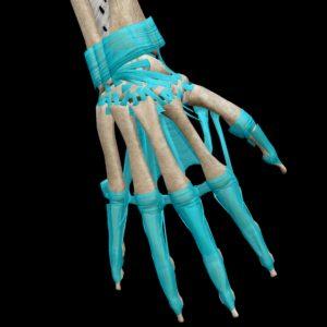 手の甲の靭帯
