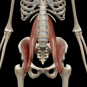 体幹筋2(深層腹筋群)